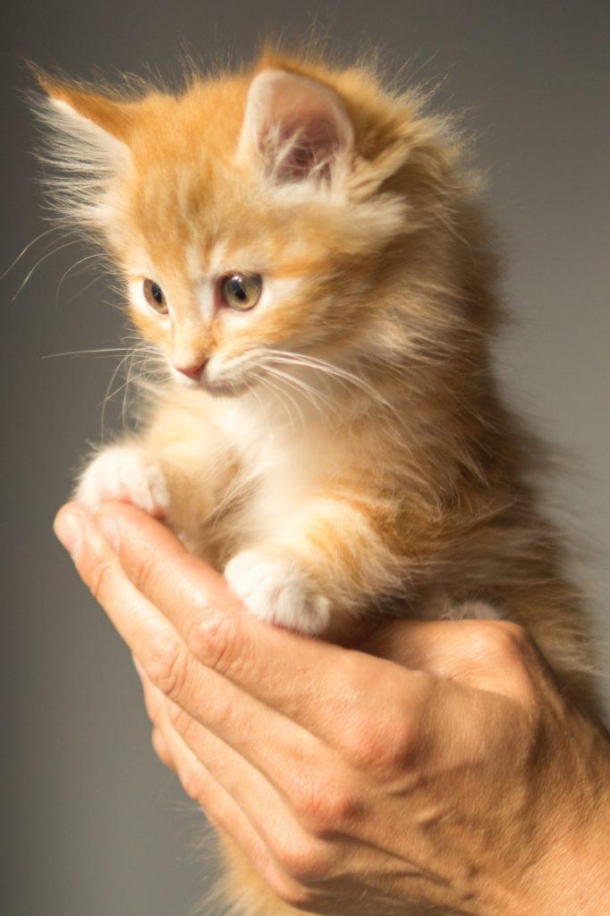 száraz macskatápok